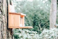 huisje Nordic eekhoornbakje