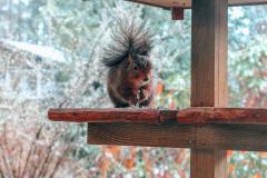 Bed & Boshuisje eekhoorn